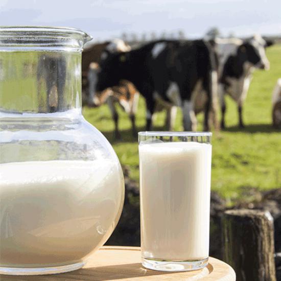 Doğal Silivri Köy Sütü 5 Lt